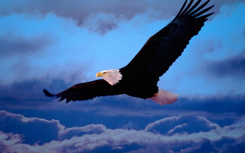 雄鹰展翅简笔画彩铅图片